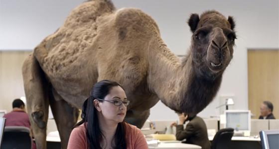 Geico Car Insurance Camel Commercial