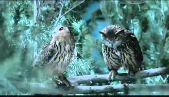 geico owls